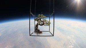 Azuma Makoto - Bonsai nello spazio
