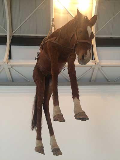 Il cavallo appeso di Maurizio Cattelan al Castello di Rivoli